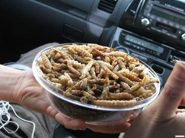 fried insects - not the most delicious food in the world :)