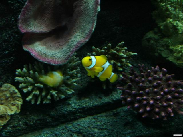 """Finding Nemo""'s main characters"