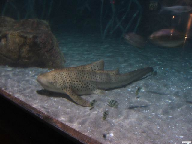 A small reef shark at Siam Ocean World